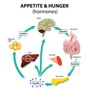 hunger hormones and weight