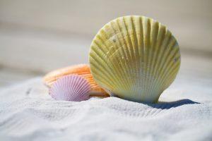 How I Choose a Safe Sunscreen